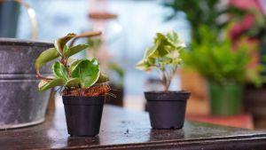 Två växter.