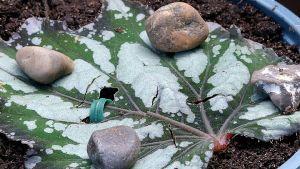 Stenar på ett grön blad.