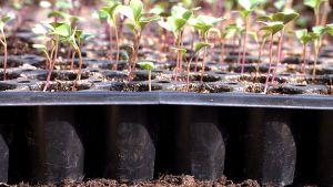 Plantor i plastkrukor.