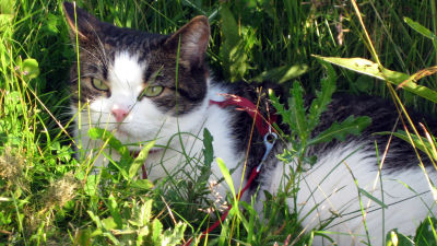 Un gatto nell'erba.