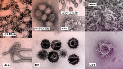 Olika virus fotograferade i mikroskåp.