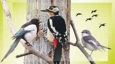 Kolme lintua puussa