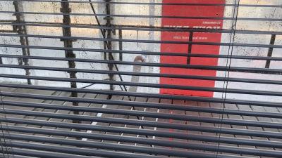 Utsikten från ett fönster visar byggnadsställningar och röd-vitt plast utanför en lägenhet. Husbolaget i fråga fasadrenoveras.
