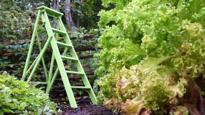 En grön stege i ett trädgårdsland.
