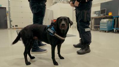 Hunden Heila i förgrunden i ett upplyst rum. I bakgrunden ser man benen på två personer.