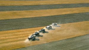 Intensivt jordbruk betyder att det används bekämpningsmedel och att man avlägsnar omgivande natur