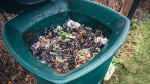 Kompostin sisältöä.