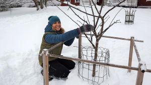 Trädgårdsmästare Lena Gillberg sitter på huk i snön framför ett familjeäppelträd