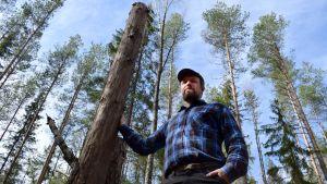 Jussi Saarinen står lutad mot en kapad trästam som är tre meter hög.