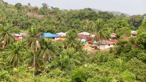 En by ligger inbäddad i en djungel.