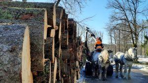 Hög med stockar och skogsarbetande hästar i Kokon i Borgå