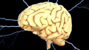 Bild på en hjärna