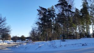 En snötäckt skogsdunge i en vägkorsning.