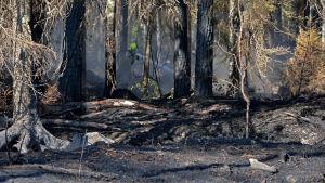 Släckning av skogsbrand i Pyhäranta i juli 2018.