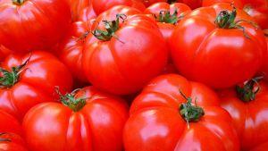 Punaisia tomaatteja