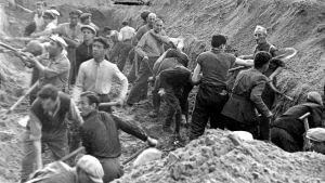 Ihmisiä kaivamassa maata.