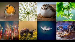 Luontovuoden kuvahaasteeseen osallistuneita makrokuvia