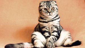 Kissa istuu.