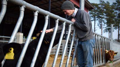 Kasper Lindroos klappar en svart dexter-ko på huvudet ute i lös kalldrift.