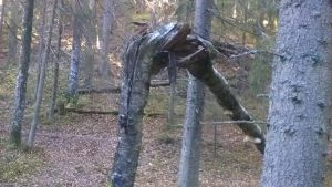 bruten trädstam