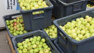 Äpplen i lådor.
