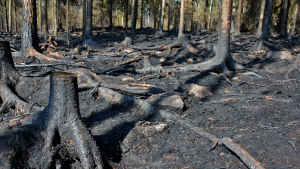 Skogsbrand i Pyhäranta i juli 2018.