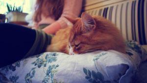 En orange-randig katt ligger på en kökssoffa och sover.