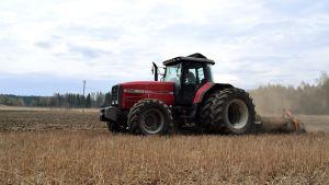 En röd traktor harvar på en dammig åker i ett nästan grönskande vårlandskap.