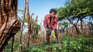 en ung man i Swaziland vattnar sina odlingar