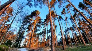 Parkskogen i Kokon i Borgå