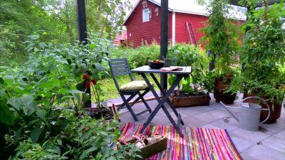 Tomat- och chiliplantorna frodas i växthuset