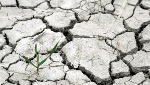maaperä halkeilee kuivuudesta