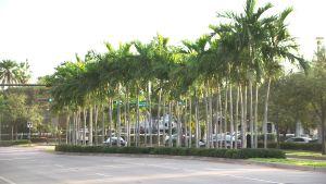 Gatorna i Key Biscayne är kantade av palmer.