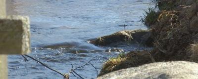 Vatten porlar i en bäck.