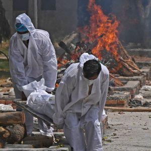 Två personer i skyddsklädsel bär bort en anhörig som dött i sviterna av covid-19 i Indien.