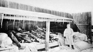 En man i ansiktsmask står bredvid flera döda pestoffer. Det är kallt och det hänger istappar från taket