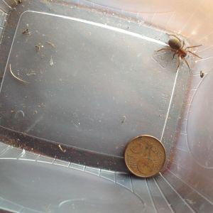 9 åriga Johannes Åman hittade en stor spindel i en rutten stubbe och undrar vilken art den tillhör.
