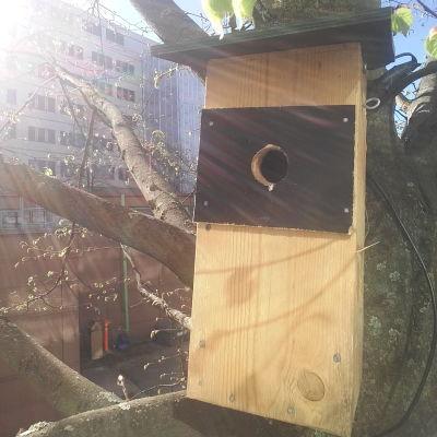 Linnunpönttö puussa Ison Pajan pihassa.