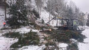 Skogsavverkning i Otepää i södra Estland i ett snöigt november 2016
