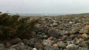 Strand med stenar på Nordkoster