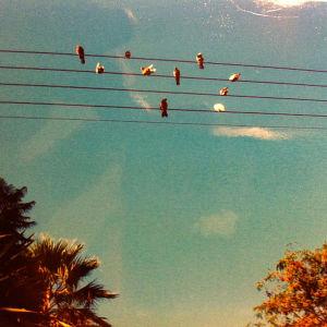 Lintuja istumassa puhelinlangoilla Kreikassa.