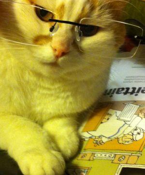kissa silmälasit päässä