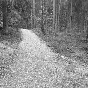 Svartvit bild på en grusväg i skogen.
