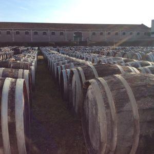 Languedoc-Roussillon on vahvaa viiniseutua.