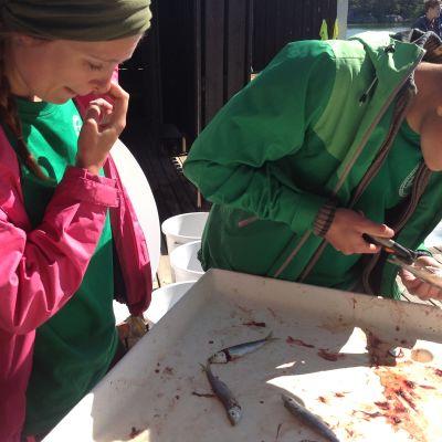 Lucinda Kraufvelin och Eemeli Repo från Hangö gymnasium kollar om det finns något i fiskens mage.
