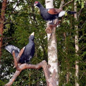 Trätjädrar uppe i ett träd, skulpterade av Lars-Göran Söderholm