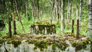 Varjakan sahan akselin katkeamiskohta Varjakansaaressa keskellä metsää, sammaloituneet rauniot, törröttäviä betoniputkia.