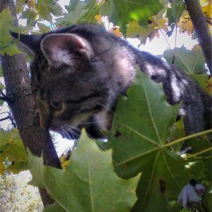 Kissa puussa