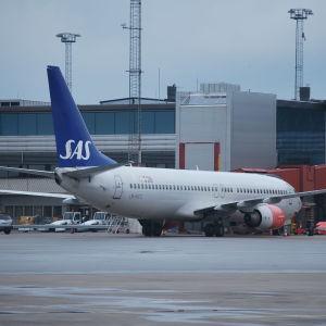 Ett av SAS flygplan står på marken intill en flygterminal.