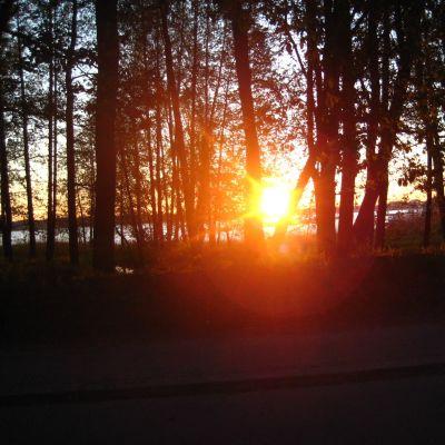 Solen och havet skymtar mellan svarta silhuetter av träd.